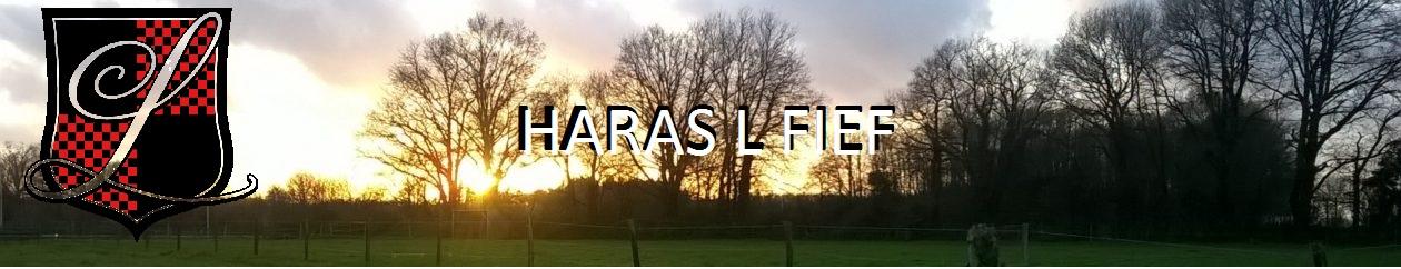 Haras L Fief